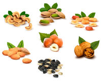 Big collection of ripe nuts stock illustration