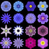 Big Collection of Various Blue Pattern Flowers Isolated on Black. Big Collection of Various Blue Flowers. Kaleidoscopic Mandala Patterns Isolated on Black stock photography