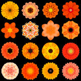 Big Collection of Various Orange Pattern Flowers Isolated on Black Stock Photo