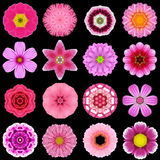 Big Collection of Various Purple Pattern Flowers Isolated on Black Stock Image
