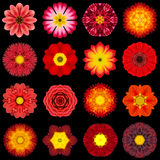 Big Collection of Various Red Pattern Flowers Isolated on Black. Big Collection of Various Red Flowers. Kaleidoscopic Mandala Patterns Isolated on Black royalty free stock image
