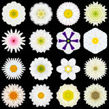 Big Collection of Various White Pattern Flowers Isolated on Black Stock Photo