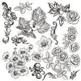 Big collection of vector flowers and plants drawn in old style Stock Photography