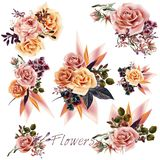 Big collection of vector roses and leafs. For design Royalty Free Stock Images
