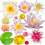 Big Collection of water lily Royalty Free Stock Images