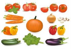 The big colorful collection of vegetables. vector illustration