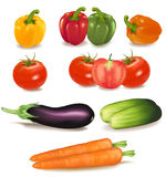 The big colorful group of ripe vegetables. Royalty Free Stock Photography