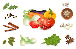 The big colorful group of vegetables. Royalty Free Stock Images