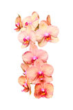 Big colorful orchids flowers bunch Stock Photos