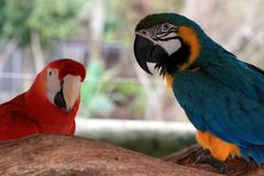 Big colorful parrot, birds of tropical paradise Stock Photos
