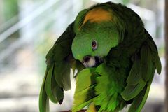 Big colorful parrot, birds of tropical paradise Royalty Free Stock Photography