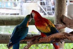 Big colorful parrot, birds of tropical paradise Royalty Free Stock Images