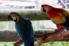 Big colorful parrot, birds of tropical paradise Stock Photography