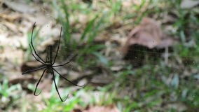 Big and colorful Spider in its net. Was my neighbor for several days in Tonsaid, Thailand Royalty Free Stock Image