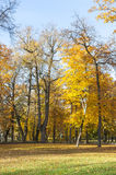 Big colorful trees with yellow autumn leaves Stock Photography