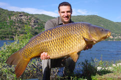 Big common carp Royalty Free Stock Photo