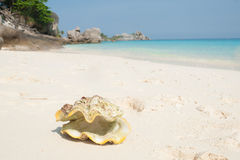 Big conch on a shore Royalty Free Stock Photography