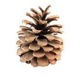 Big cone Stock Photo