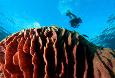 Big coral stock photography
