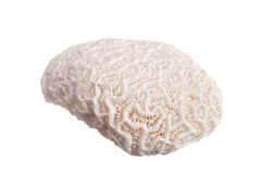 Big coral Royalty Free Stock Photo