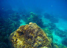 Big coral reef underwater photo. Deep blue sea view with bottom relief. Stock Photography