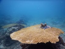 A big coral reef Stock Images