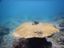 A big coral reef Royalty Free Stock Photography