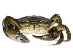 Big crab Stock Photos