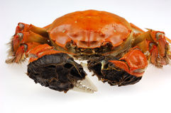 Big crab Royalty Free Stock Image