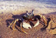 Big crab go out of water to take a walk on coast