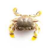 Big crab Royalty Free Stock Photo