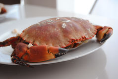 Big crab. Red boiled crab on the plate, meal, dish, seafood, close-up Stock Images