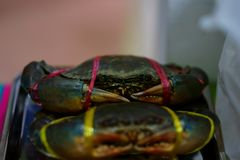 Big crabs are tied for sale stock photography