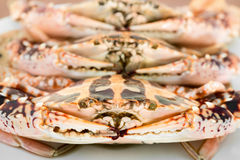 Big crabs on white plate Stock Photo