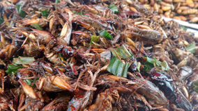 Big Crickets on Deep fried insect   vendor in Bangkok Stock Photo