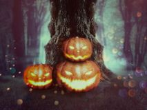 Spooky Tree with Pumpkins. Big crooked spooky tree in the night forest with Halloween pumpkins Stock Photo