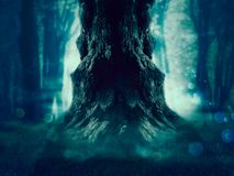 Spooky Tree in the Forest royalty free stock photography