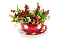 Big cup and saucer with tulips. Big dotted red cup and saucer full with colorful tulips Stock Image