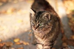 Big and curious ginger cat on the street. Street cat looks at you in the sunlight in the fall stock photos