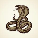 Snake. Vector drawing vector illustration