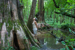 Big Cypress, Cache River State Natural Area, Illinois, USA. A woman looks at a  Big Cypress being in Cache River State Natural Area, Illinois, USA Stock Images