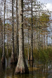 Big Cypress National Preserve Royalty Free Stock Photography