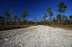 Big Cypress National Preserve Stock Images