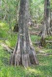 Big Cypress National Preserve Florida 2. Big Cypress National Preserve Florida USA 2 royalty free stock images