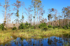 Big Cypress National Preserve Stock Photography
