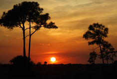 Big Cypress Sunset royalty free stock images