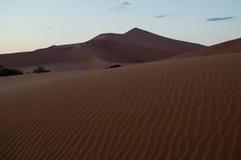 Big Daddy Dune in Dawn, Woestijnlandschap, Sossusvlei, Namibië Royalty-vrije Stock Fotografie