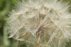 Big dandelion Royalty Free Stock Photos