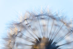 Big dandelion head Royalty Free Stock Photos