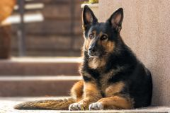 Faithful looking mixed breed dog stock images